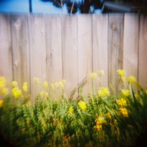 Bewitched: flowers on Fence