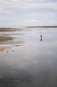 Lone man walking on the beach