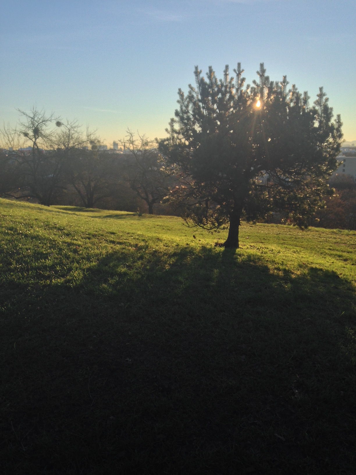 Sun behind the apple tree