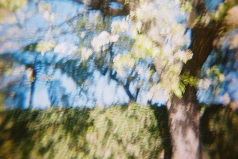 02_cherry_blossoms_1