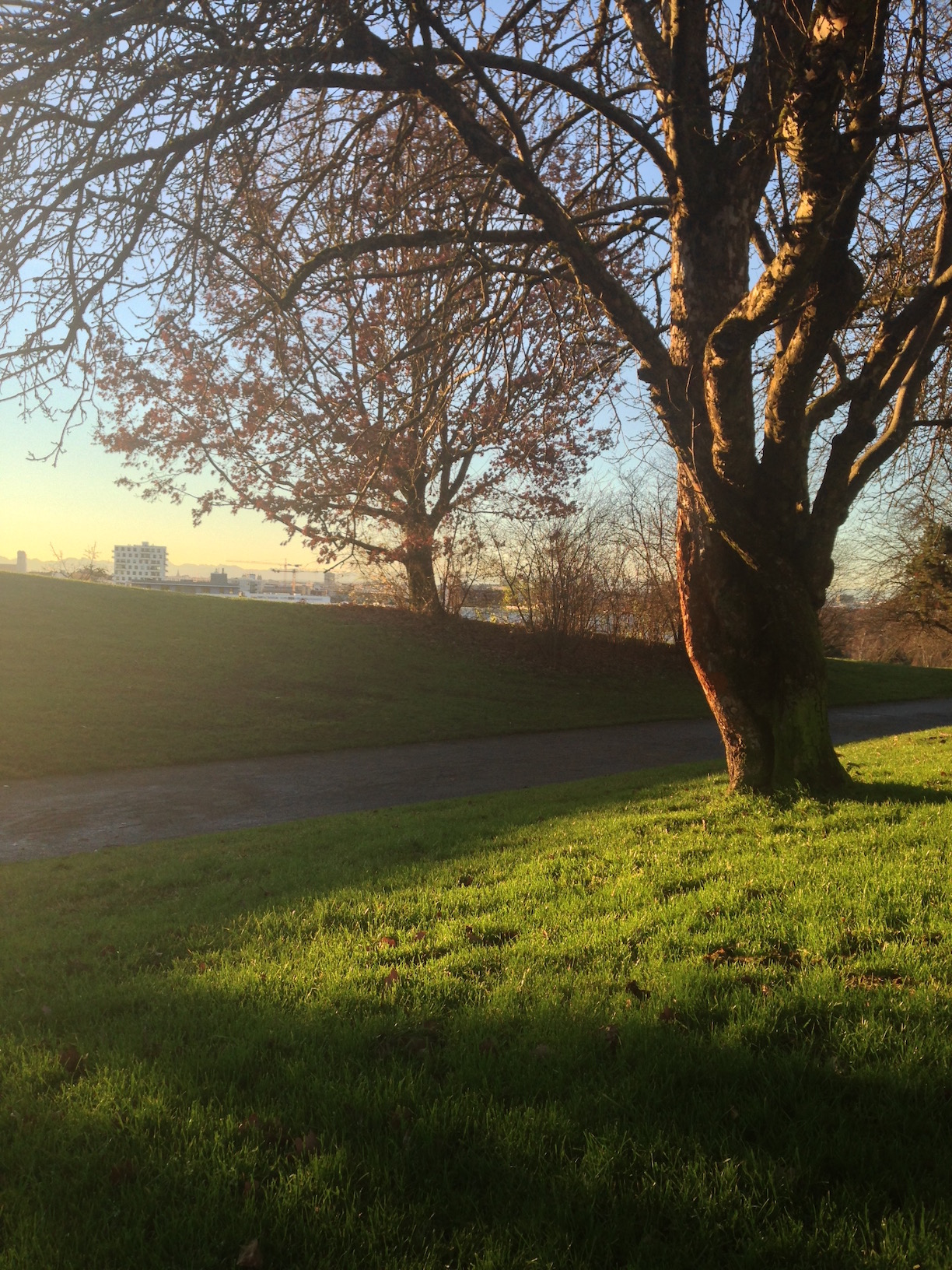 Tree and the city in background, Olympiaberg