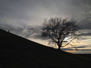 Man, bird and tree at at grey sunset
